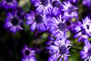 file purple flowers 7769562568 jpg wikimedia commons