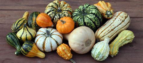cuisiner un potiron les légumes fruits la courge