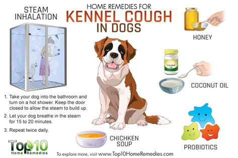 what does kennel cough sound like in cats