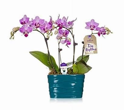 Hallmark Container Flowers Turquoise Ceramic Plant Orchid