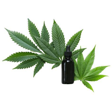 รายละเอียดธีมกัญชา (Cannabis) | Thematic