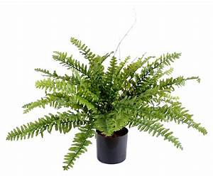 Pot A Plante : plante artificielle foug re boston en pot int rieur h 50cm vert ~ Melissatoandfro.com Idées de Décoration
