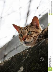 Scared, Cat, Stock, Image, Image, Of, Looking, Eyes, Wide