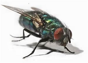 Fliegen Vom Auto Entfernen : insekten vom auto entfernen eine anleitung autohaus weigl ~ Watch28wear.com Haus und Dekorationen
