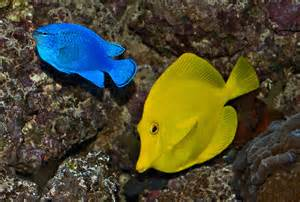 Exotic Tropical Fish