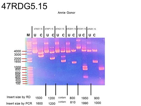 You will be glad to know that right now genetic mutations pogil answer key pdf is available on our online. Bestseller: Pogil Activities For Ap Biology Genetic Mutations Answers
