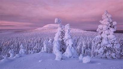 Snow Winter Earth Trees Covered Nature Background