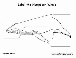 Whale  Humpback  Labeling Page