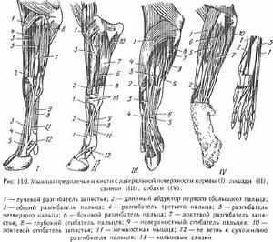 Сильные боли после операции на тазобедренном суставе