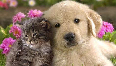 las fotos de animales recien nacidos mejoran la