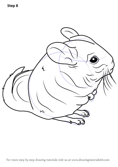 learn   draw  long tailed chinchilla rodents step