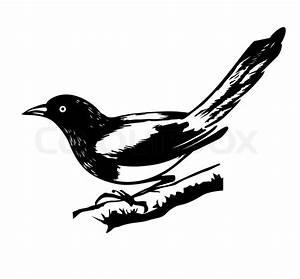 Elster Vogel Vertreiben : r abbildung elster auf wei em hintergrund vektorgrafik ~ Lizthompson.info Haus und Dekorationen