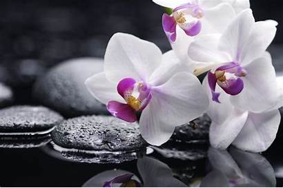 Orchid Shenzhen Wallpapers Backgrounds