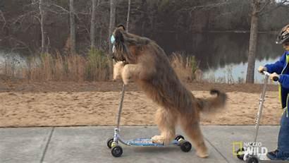 Dog Breeds Training Wild Dogs Puppy K9