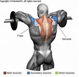 21 best Ab Workouts images on Pinterest | Bodybuilding ...