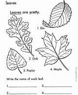 Leaves Leaf Printable Coloring Pages Tree Printables Types Multiple sketch template