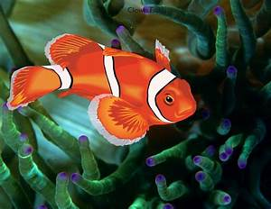 Clown Fish Wallpapers HD Download