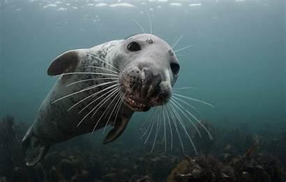 Underwater Seal Photographer Geographic National Winning Nationalgeographic