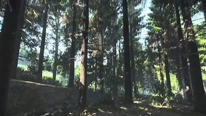 Kingdom Forest Come Deliverance Pc