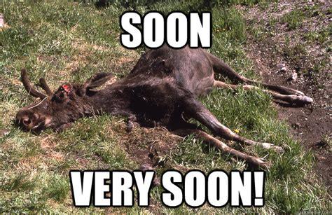 Moose Meme - moose meme 28 images 10 random creatures you might encounter in estonia craig the canadian