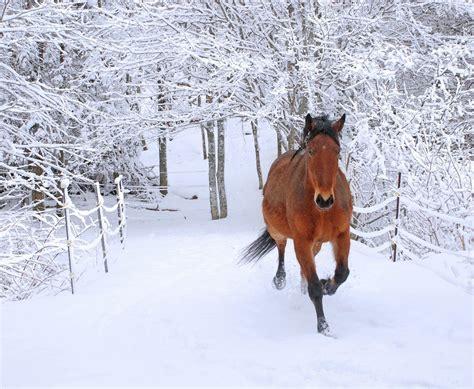 snow scene winter horses horse scenes running dancer upload beauty