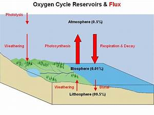 File Oxygen Cycle Jpg