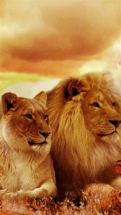 Lion Lioness African Iphone Wallpapers Edge Samsung