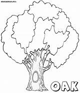 Oak Coloring Pages Tree Print Hollow Colorings sketch template