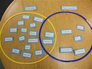 Vascular And Non Vascular Plants Chart