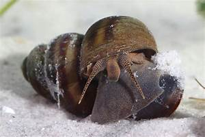 How To Take Care Of Freshwater Snails