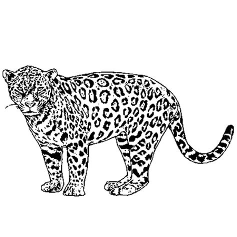 file jaguar logo free encyclopedia patyextrem