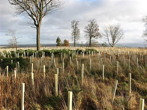 Filenew Tree Planting  Geographorguk 625802jpg