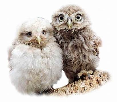 Owl Animals Bing Tubes Psp Animal Pet