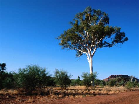 are the tallest trees in tasmania nat geo education blog
