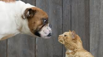 dogs vs cats vs cat what pet preference says about