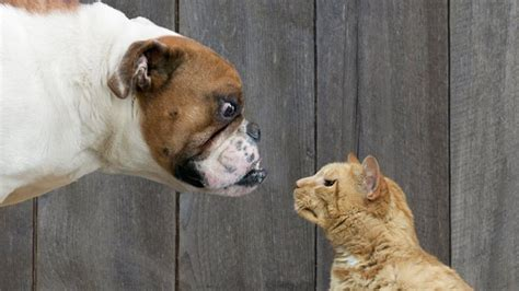dog people  cat people  pet preference