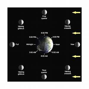 A Guide To Understanding The Eath  Sun  Moon Cycle