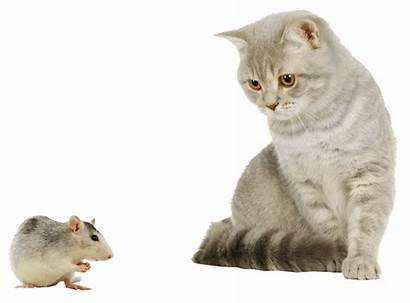 Mouse Cat Transparent Background Regeneron Backgrounds Freeiconspng