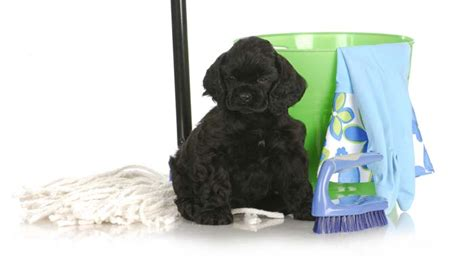 How To Get Dog Urine Smell Out Of Carpet Light Carpet Bedroom Cost Stanton Wool Sisal Monarch Red Wine Stain Removal From How Much To Replace In One Room American Cleaners Next Day Installation