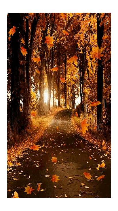 Autumn Leaves Fall Falling Path Animated Forest