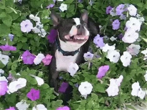 This Is How You Spot And Stop Your Dogs Seasonal Allergies