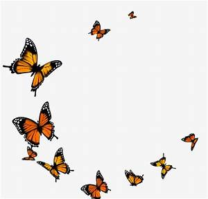 Butterfly Fly, Yellow, Butterfly, Frame PNG Image and ...