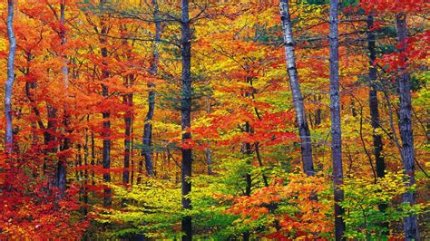Autumn Wallpapers Widescreen by 45 Autumn Hd Widescreen Wallpaper On Wallpapersafari