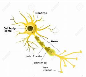The Neuron Labeled 37371607 Neuron And Synapse Labeled