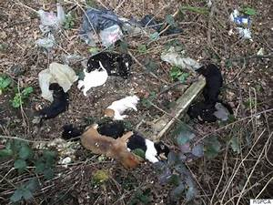 RSPCA Finds Dead 'Puppy Farm' Puppies In St Albans Country ...