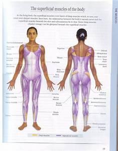 8 Best Thai Massage Manual Free Pdf Images On Pinterest