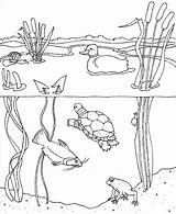 Coloring Pond Pages Animals Water August Printable Cycle Ocean Habitat Month Quality Didi Sheets Print Preschool Worksheet Grass Getcolorings Animal sketch template