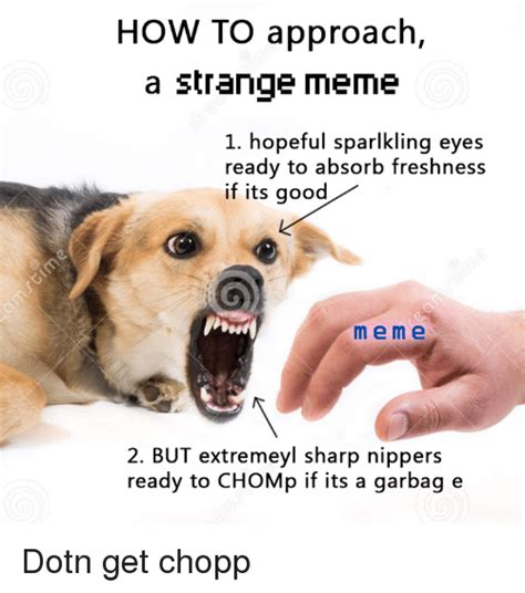 How To Make A Meme With 2 Pictures - how to approach a strange meme 1 hopeful sparlkling eyes