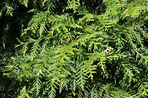 Welche Pflanzen Im Garten Sind Für Kinder Giftig?