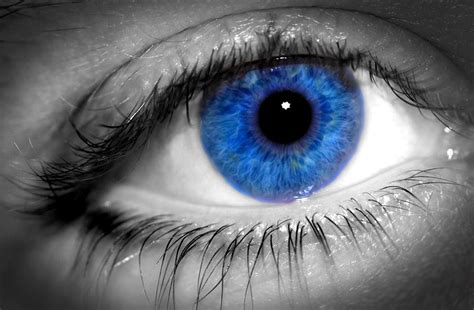 And Blue Eye by 15 Characteristics Of With Blue Pei Magazine